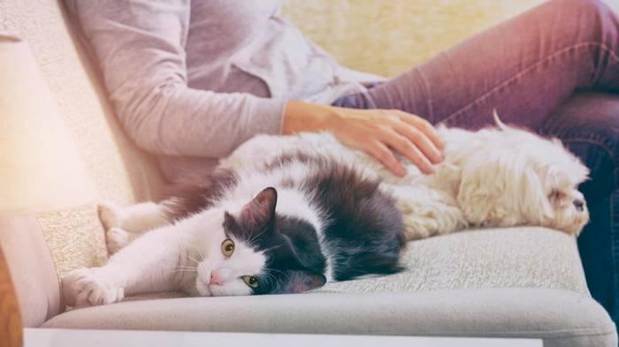 Мешают ли домашние животные содержать дом в чистоте