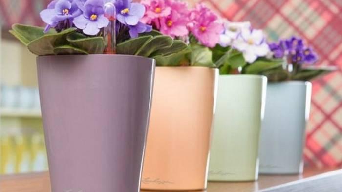 Фиалки цветут и пахнут даже зимой… А всё благодаря этому простому средству из аптечки
