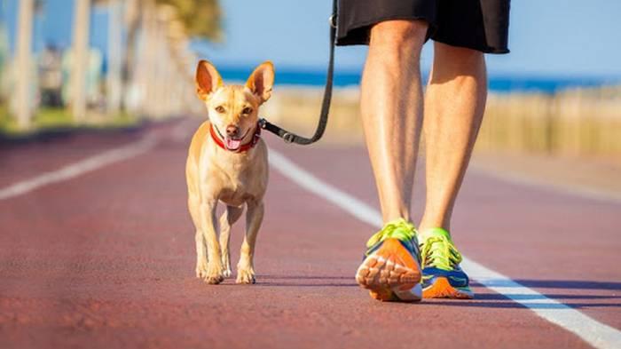 Почему у собак возникают проблемы с поведением
