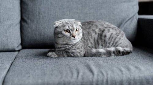 Какие кошки отличаются сообразительностью