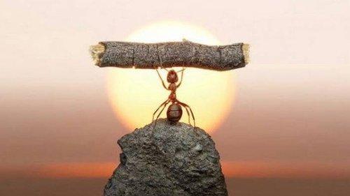 Почему невзгоды ведут к благой цели