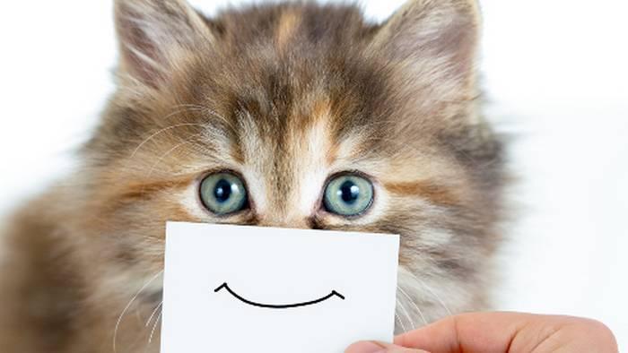 Как сделать кота счастливым