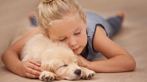 Если домашние животные любят спать в твоей постели, обрати внимание на...
