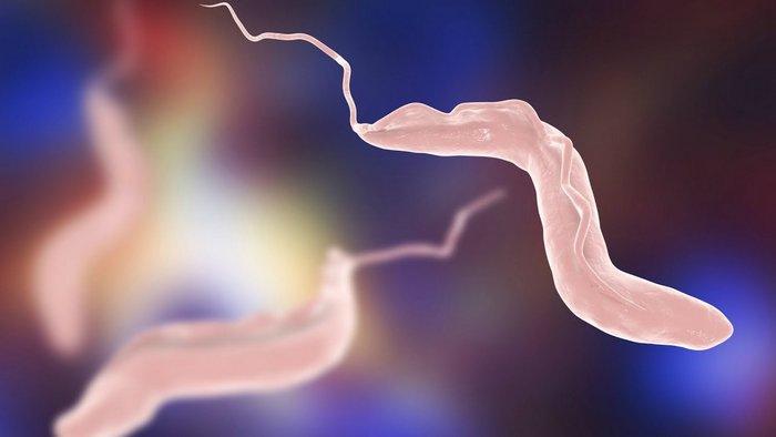 Эти признаки безошибочно укажут на паразитов в организме