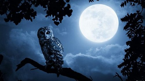 Популярные мифы о луне и лунном свете