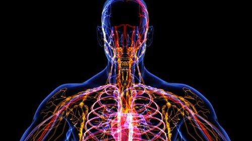 Мы совершенно ничего не знаем о нашей лимфатической системе
