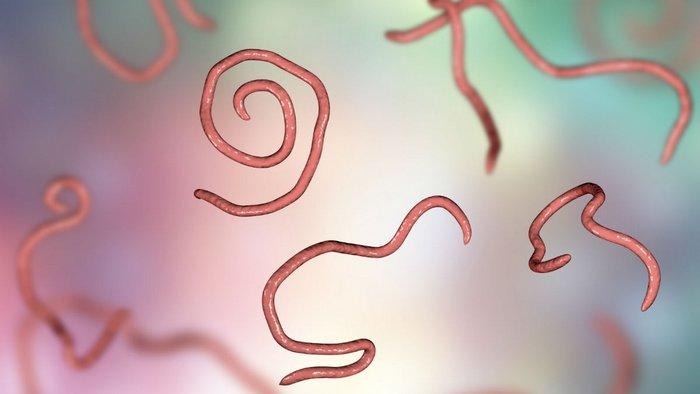 Натуральные способы избавления от паразитов