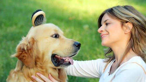 Виды шерсти собак: особенности и правильный уход
