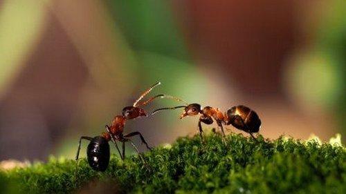 Как избавиться от муравьёв на участке?