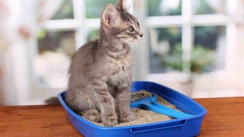 Причины купить наполнитель для лотка — даже если у вас нет кошки