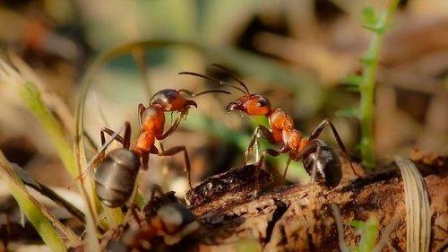 Народные средства от садовых муравьев в огороде