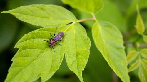 Это вредитель? 5 опасных жуков, которые больше всего вредят урожаю и 5...