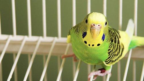 Птичьи клетки в интерьере: идеи использования