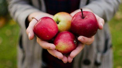 Пять причин съедать минимум одно яблоко в день